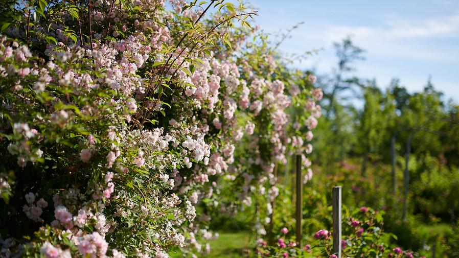 Jardins_03.jpg