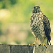 20-a-009-animals-or-bird-8x10-1.jpg