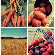 bc-farming.jpg