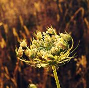 20-B-106 Nature (geology, plants).jpg