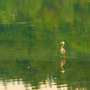 Wildlife - J.Dowd (2).jpg