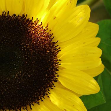 20-b-110-portrait-of-a-flower-4x6-2.jpg