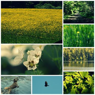 Mattheson Lake Adventures.jpg