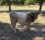 bull 9-1-18.jpg