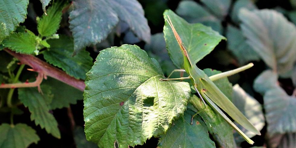 Gli insetti e le piante
