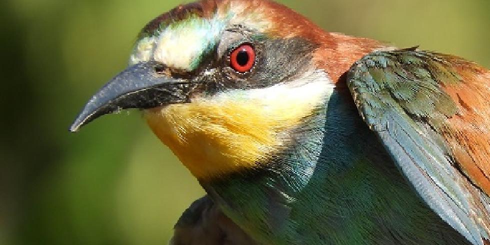Il colorato mondo degli uccelli