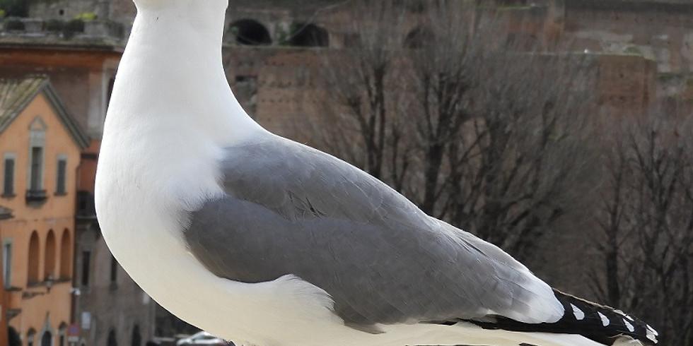 Il meraviglioso mondo degli uccelli (1)