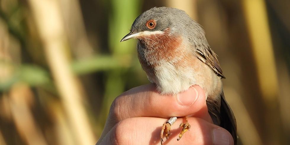 Gestione e conservazione dell'avifauna