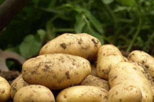 Pommes de terres Primeurs bio Prix au Kg