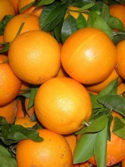 Orange de table Bio prix au Kg