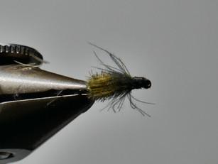 CDC beetle #18