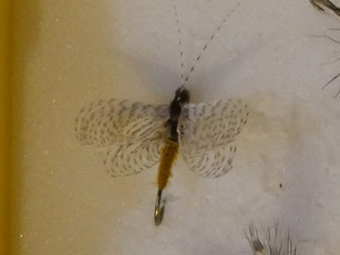 Fluttering Caddis