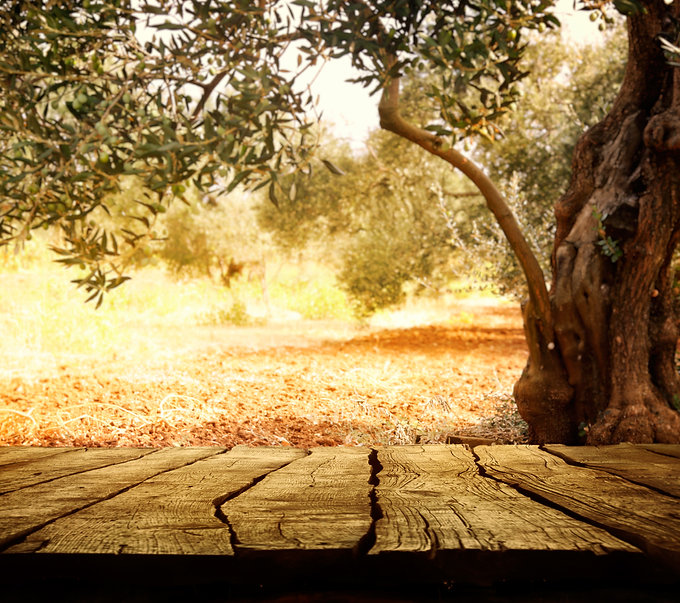 Wooden table with olive tree.jpg