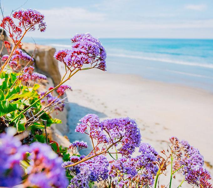 Solana Beach California USA Pacific Ocea