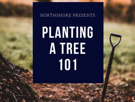 Planting a Tree 101