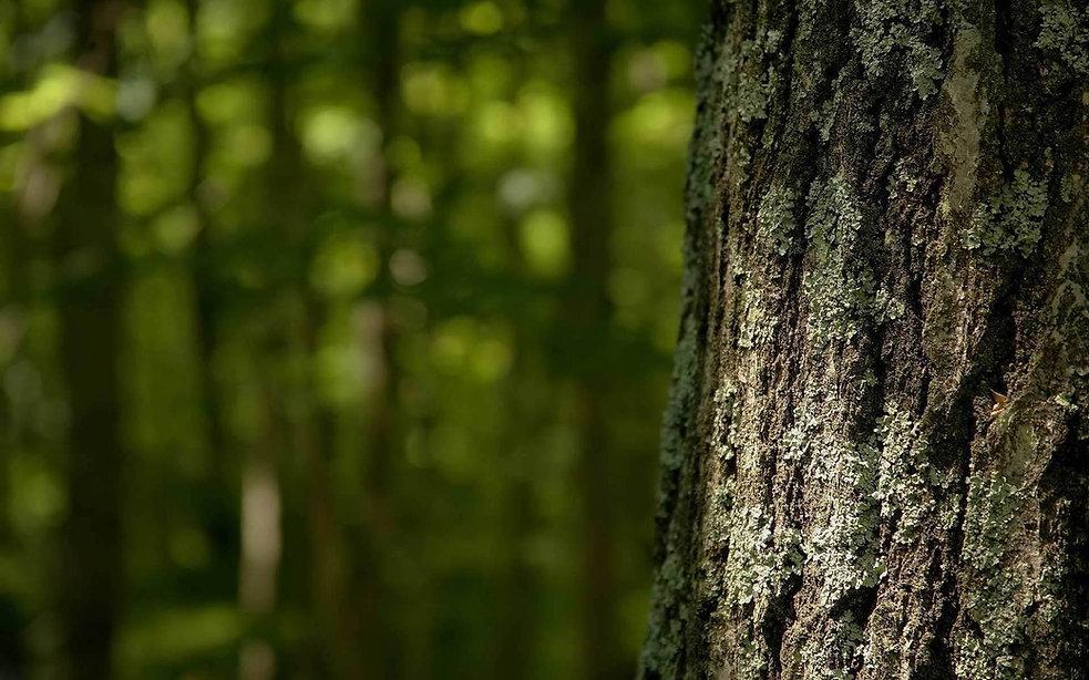 39325661-tree-bark-wallpapers.jpg