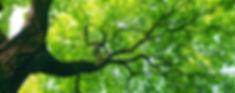 tree-care.jpg