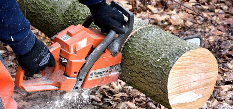 What-Does-Tree-Removal-Include-848x480.j