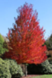 redpointe_fc_tree_home.jpg