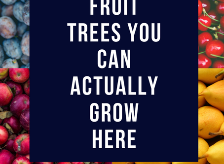 Fruit Trees You Can Actually Grow Here