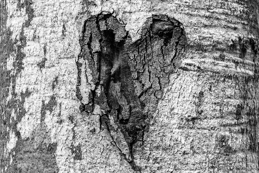 heart in trunk of tree