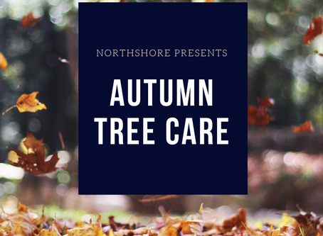 Autumn Tree Care