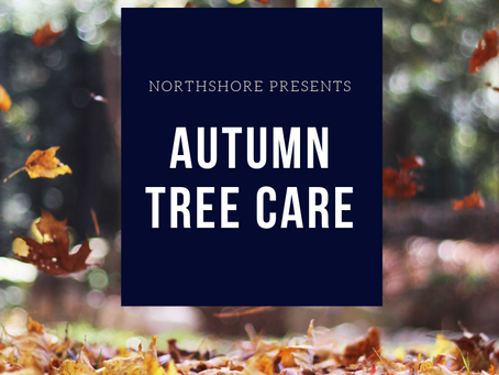 Autumn Tree Care