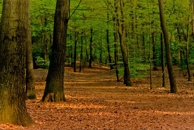 Forest Debabrata CC 2.0