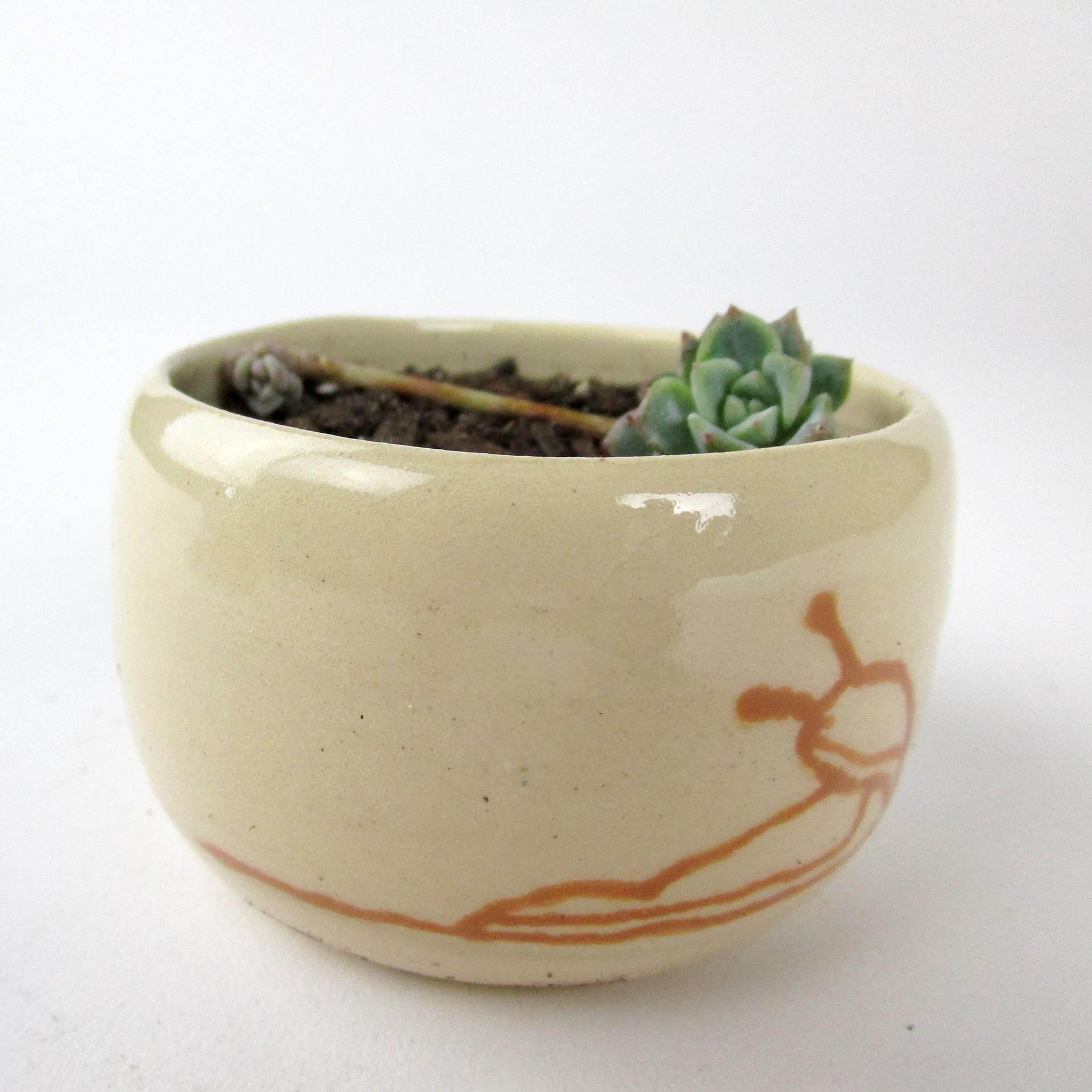 Slug plant.jpg