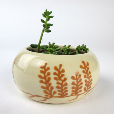 Seaweed Drawing Planter.jpg