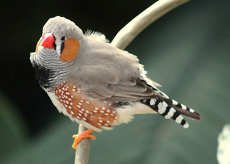 bird-177887_1280.jpg