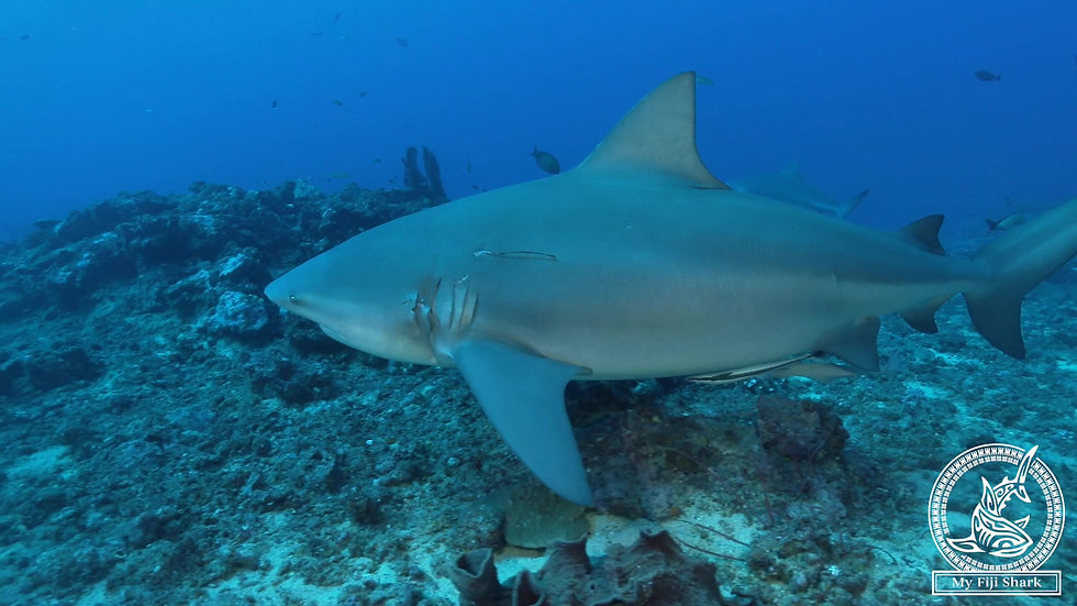 Quarterly Video Clips Of Your Shark