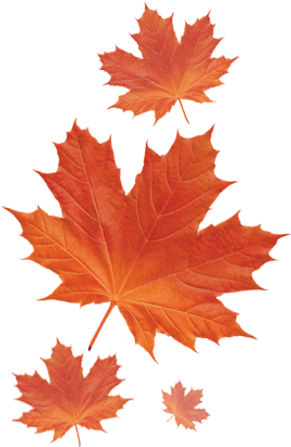 img-mapple-leaves.png