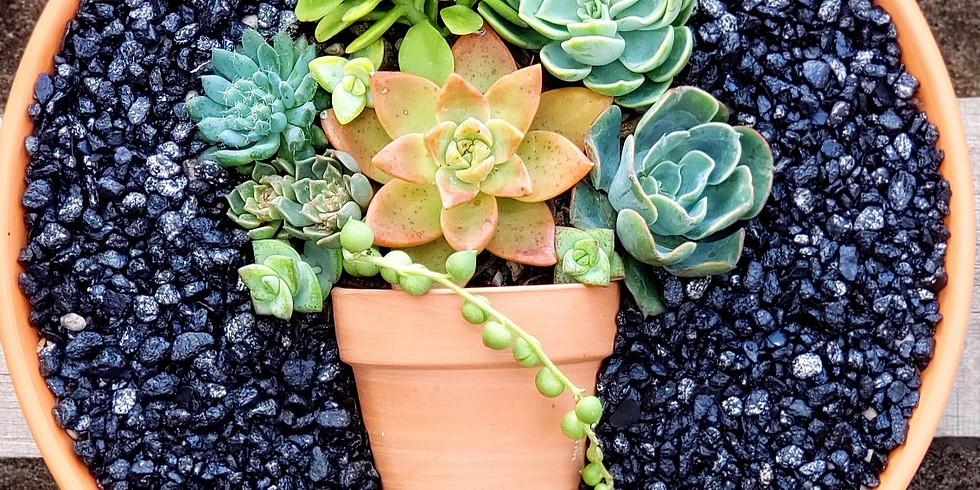 Succulent Pot in a Pot