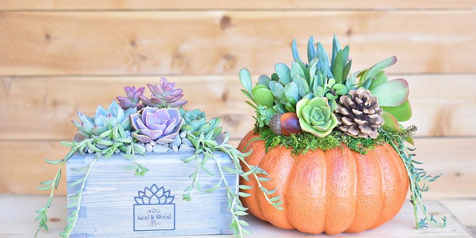 Succulent Pumpkin or Wooden Planter Workshop
