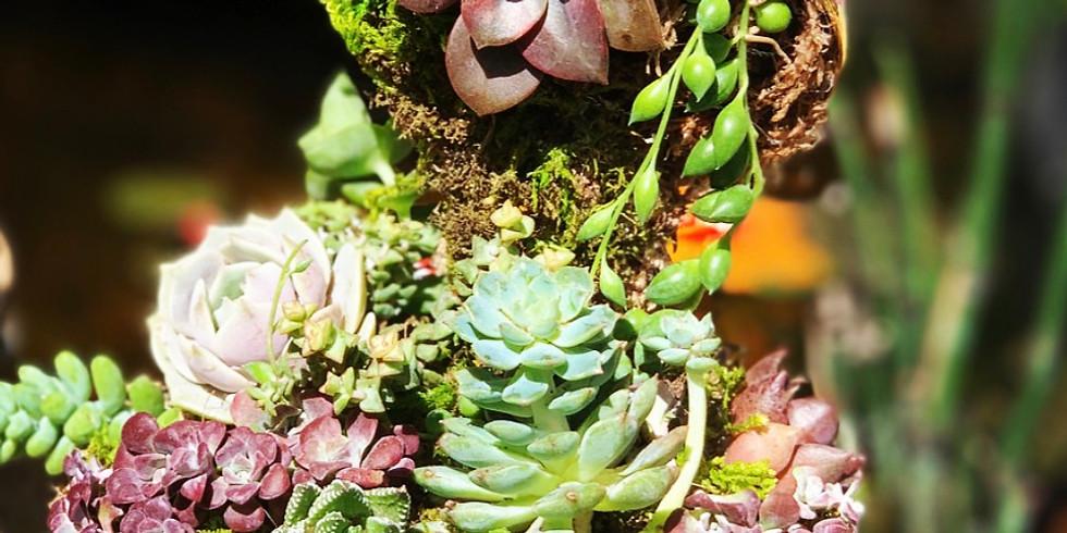 Teacup Succulent Workshop