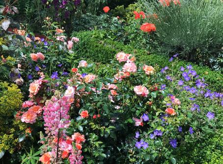 Dieser Garten inspiriert mich immer wieder...