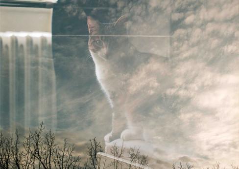 Cat Sky DE.jpg