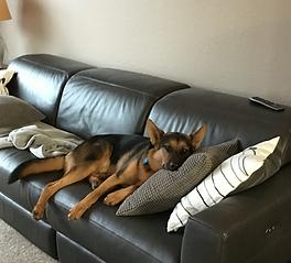 Hank napping at his new place!