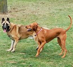 Caesar and Samone playing.