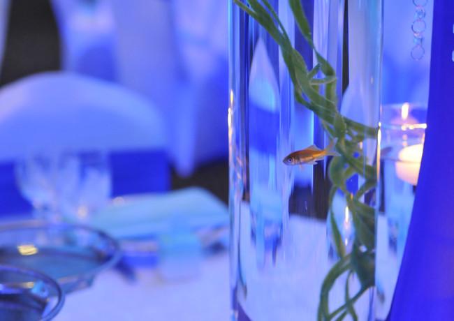 Under Blue Sea