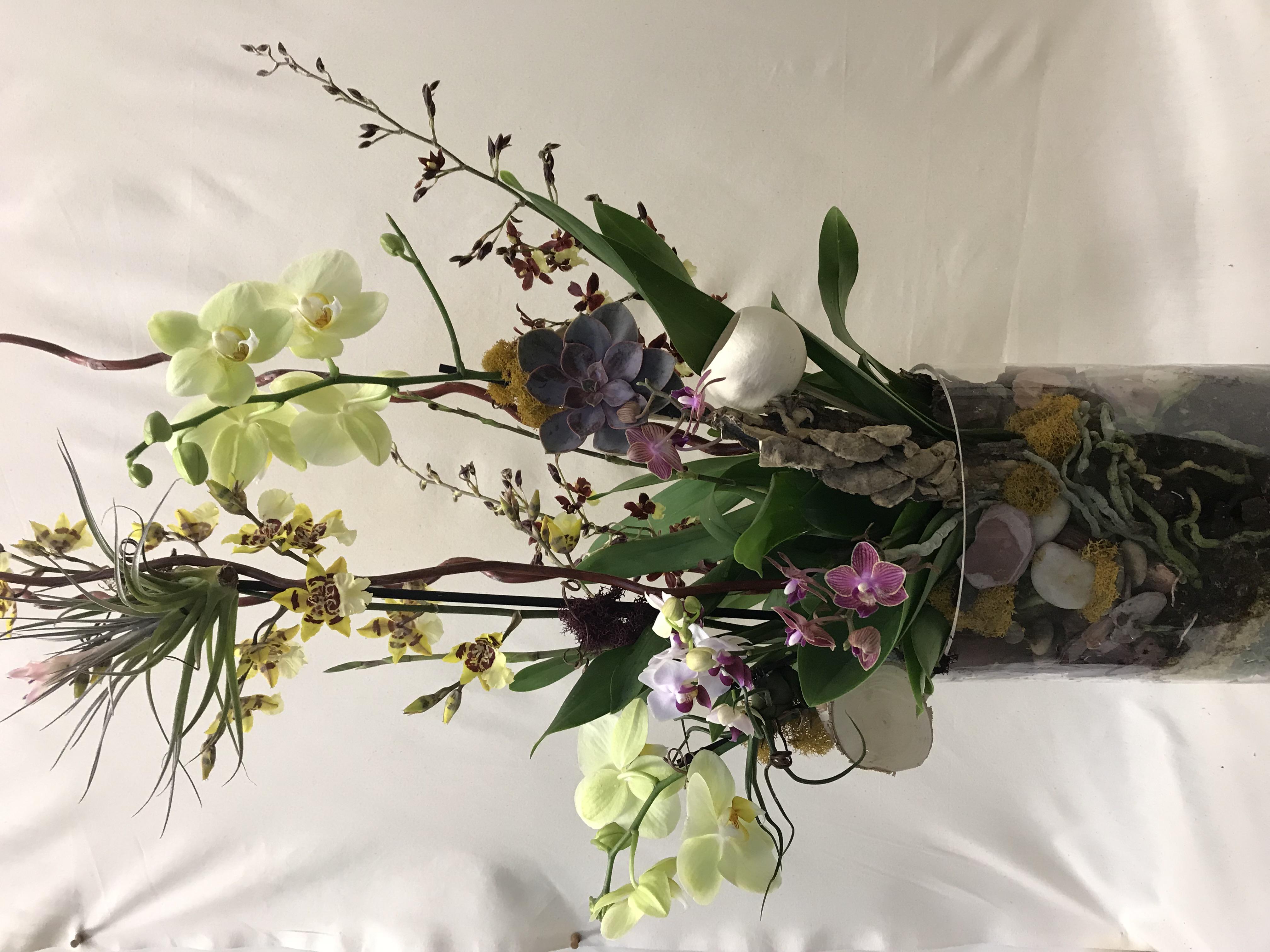 Orchid garden arrangement