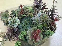 Succulent garden design
