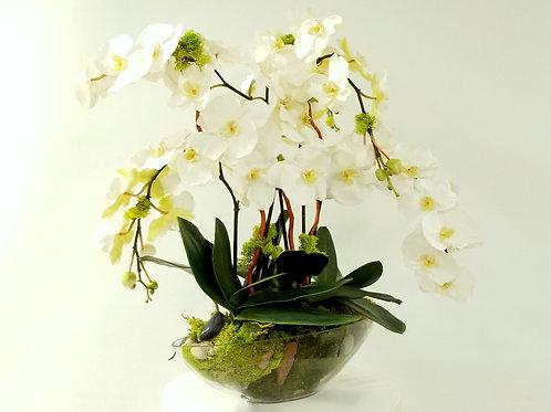 Silk Orchids Garden