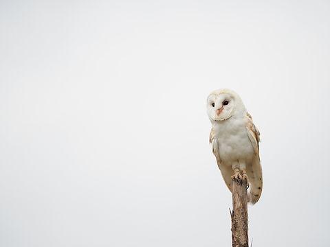 bird-3689510_1920.jpg