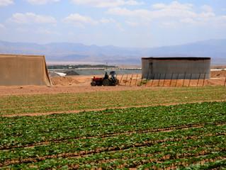 Сельское хозяйство Израиля: секрет феноменальных достижений
