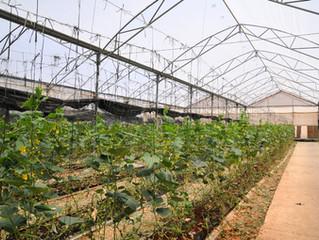 Румыния использует израильское know-how в сфере агротеха