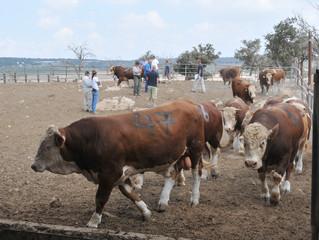 Израиль - Южному Судану: проект животноводческого комплекса