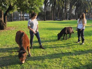 Мини-лошадки в молодежной деревне Аянот