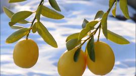 Израильские агротехнологии одобрены ООН